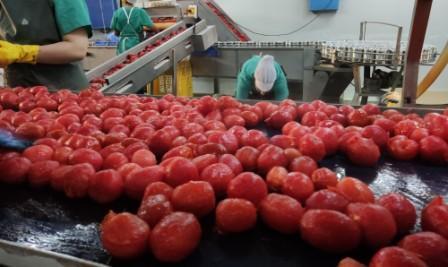 Escaldado tomates compr