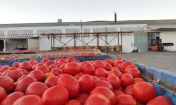 Llegada tomates Compr recort